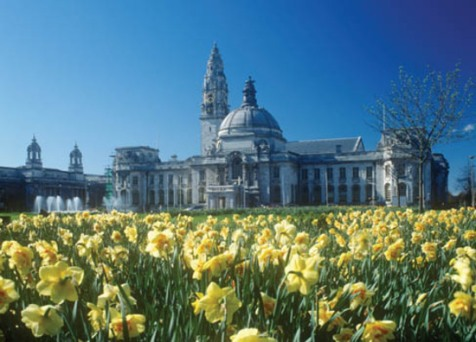 Daffodils, City Hall, Civic Centre, Cardiff, South Wales