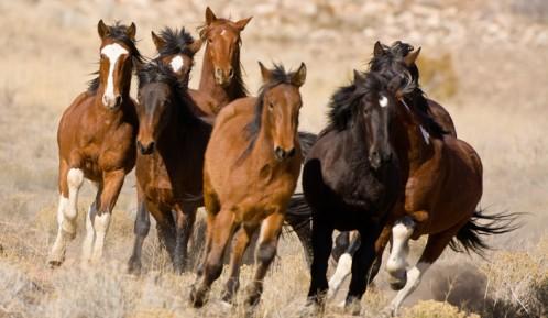 Mustangs 2 - Saddle Up